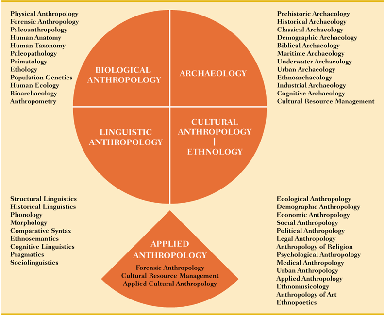 the 4 subfields of anthropology