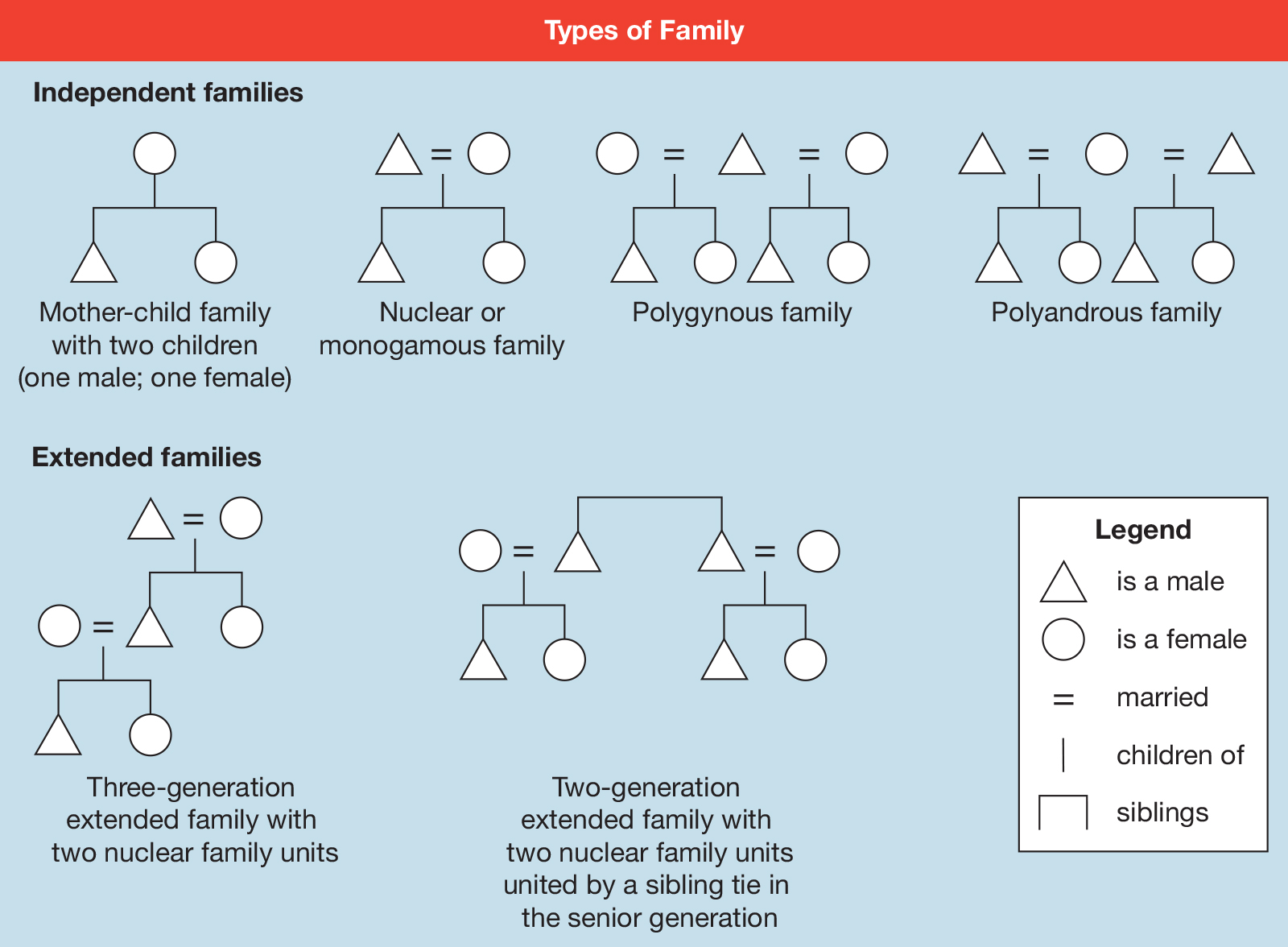 diagram of nuclear family diagram of poaceae family floral the family